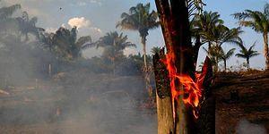 Dünyanın Akciğerleri Yanıyor: Amazon'da Yangınlar Rekor Seviyeye Ulaştı