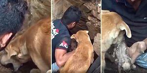 Çöken Evin Enkazında Kalan Yavruları İçin Görevlilerle Birlikte Seferber Olan Anne Köpek!