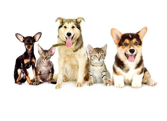 1. Kısırlaştırılmış kediler ve köpekler daha uzun yaşar çünkü bu durum onları hastalık taşımaya daha az duyarlı hale getirir ve kaçma ve kavgalara karışma ihtimallerini azaltır.