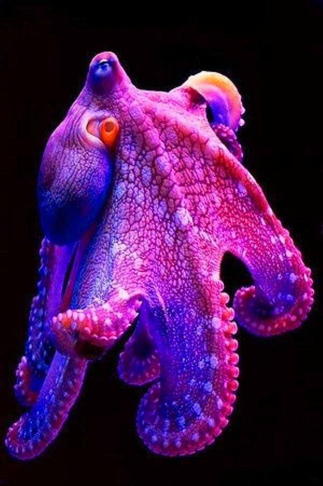 9. Ahtapotlar inanılmaz renklere bürünebildikleri halde renk körüdürler.