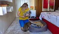 30 Köpeği Yaylaya Terk Ettiler: 'O Hayvanları Ölüme Bırakmayalım'