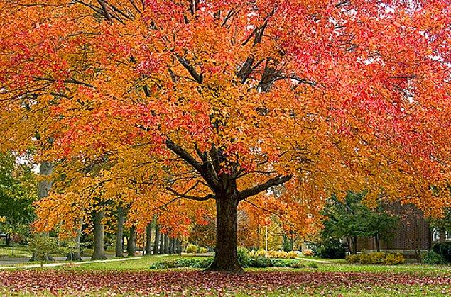 9. Ağacın ne kadar heybetli olduğunun bir önemi yok, yaprakları her koşulda yere dökülür.