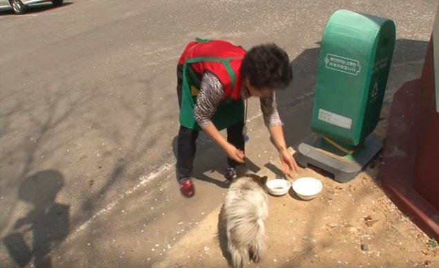 Mahalleli bu savunmasız köpeğe yemeğini ve suyunu veriyor, arabalara karşı koruyor. Hatta geceyi geçirmesi için bir kulübe bile inşa etmişler.