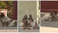 10 Yıl Önce Terk Edildiği Noktada Hala Sahibinin Dönmesini Bekleyen Minnoş Köpek