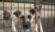 Bugün #4EkimHayvanlarıKorumaGünü: 'Türkiye Maalesef Hayvan Haklarında Sınıfta Kalıyor'