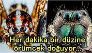 Araknofobi Mağdurları Bakmasın! Bilim İnsanları, İstedikleri Takdirde Örümceklerin Tüm İnsanlığı Yiyebileceğini Açıkladı