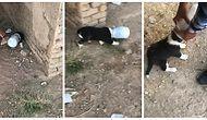 Doğaya Çöp Atarken İki Defa Düşünün! Kafasını Şişeye Sıkıştıran Minik Köpeğin Kurtarılma Anları