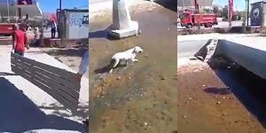 Elazığ'da Nefesleri Kesen Köpek Kurtarma Operasyonu