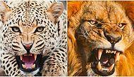 İlişkilerinde Hangi Yırtıcı Hayvan Gibisin?