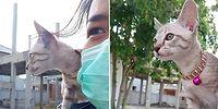 Sahibinin Omzunda Motosiklet Yolculuğu Yapan Minnoş Kedi