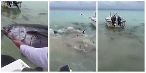 Denize Atılan Balığa Hunharca Saldıran ve Saniyeler İçinde Yok Eden Köpek Balıkları