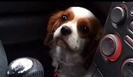 Veterinere Gideceğini Anlayınca Korkup Her Türlü Şirinliğe Başvuran Minnoş Köpek