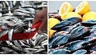Hem Hayvanları Hem Kendimizi Zehirliyoruz: Türkiye'de İki Balıktan Birinde, Midyelerin Yüzde 91'inde Mikroplastik Bulundu
