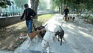 İstanbul'da Köpek Gezdiriciliği: Ayda 5-6 Bin Lira Kazanıyorlar