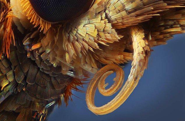 Bir kelebeğin ağız kısmı.