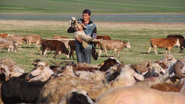 """""""İnsanlar hayvancılık yapmak istiyor ama çoban konusunda dertli"""""""