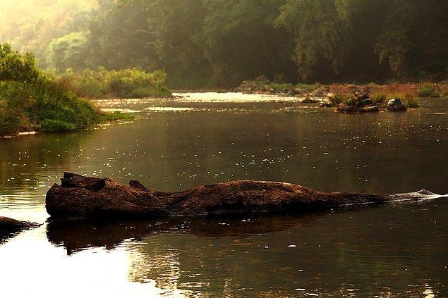 7. Nehir her zaman kütük getirmez.