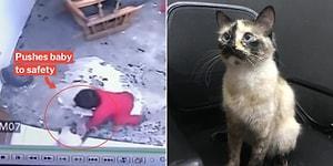Merdivenlerden Düşmek Üzere Olan Bebeği Kurtaran Kahraman Kedi!