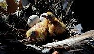 Kuşların Yumurtadan Çıkması Beklenecek: Bursa'daki Tarihi Kulede Onarım Çalışmaları Durduruldu