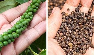 Severek Yediğimiz Baharatların Market Raflarına Gelmeden Önce Nasıl Göründüklerini Biliyor muydunuz?