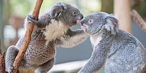 İnsana Özgü Değilmiş: Hayvanlar da Kaybettikleri Aile Üyeleri İçin Yas Tutuyor