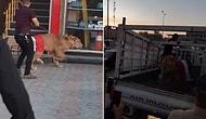 Halkı Dağıtmak İçin Polisin Köpek Tehdidine Karşı Alana Aslan Getiren Protestocular!