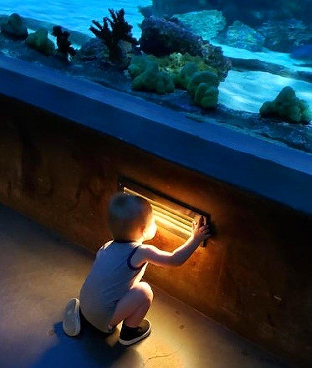 """4. """"Büyük bir köpekbalığı akvaryumundan geçen bir tüneldeyiz ve ilk heyecanlandığı şey bu."""""""