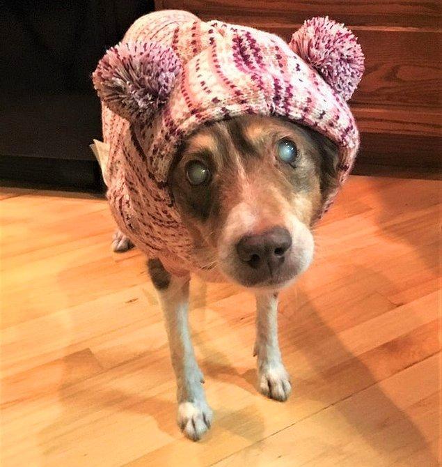"""13. """"Birkaç ay önce ailem kör ve yaşlı bir köpek olan Molly'i sahiplendi. Onunla henüz tanışmadım bile ama çoktan aşık oldum diyebilirim!"""""""