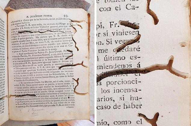 5. 1787 yılında basılan bu kitap, genellikle kitap kurdu olarak bilinen Curculionidae larvaları tarafından yeniyor.