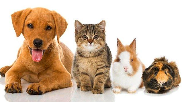 9. Aşağıdakilerden hangisi hayvanların hepsinin ortak özelliğidir?