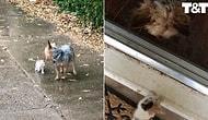 Yağmurda Islanan Yavru Kediyi Kendisini Takip Ettirerek Korumaya Çalışan Köpek