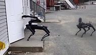 Artık Aktif Görevdeler: Boston Dynamics'in Robot Köpekleri, Polisin Bomba İmha Birimine Katıldı