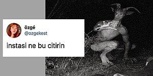 Twitter'da Paylaşılan Temsili Şeytan Görseli Goygoycuların Diline Düştü