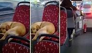Sabahın Soğuk Saatlerinde Üşüyen Köpeği Otobüse Alarak İçimizi Isıtan Güzel İnsan!