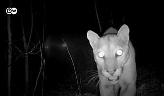 Hayvanların Gizemli Dünyasına Yolculuk: Kosta Rika'da Kaydedilen Vahşi Hayvanların En Doğal Halleri