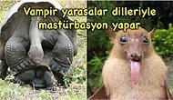 Hayvanlar Aleminde Çok Sıradan Bir Olay: Mastürbasyon Yapan Hayvanlarla İlgili Bakış Açınızı Değiştirecek 13 Bilgi