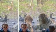Sibirya Kaplanıyla Fotoğraf Çektirmeye Çalışan Ufaklığın Korku Dolu Anları!