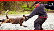 Bir Köpek Size Saldırırsa Ne Yapmanız Gerektiğini Biliyor musunuz?