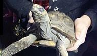 Kameralara 'Sinirli' Bir Bakış Attı: Noel Günü Evde Tek Bırakılan Kaplumbağa Yangın Çıkardı
