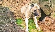 Çoban Köpeğinin Zehirlenerek Diri Diri Gömüldüğü İddia Edilmişti: Soruşturma Başlatıldı