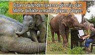 Yaşadıkları Travmalar Yüzünden Hayata Küsen Filleri Müziğin Gücüyle İyileştirmeye Çalışan Koca Yürekli Piyanist