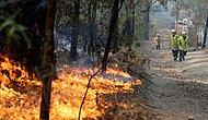 Dört Aydır Söndürülemeyen Avustralya Yangınları Neden Kaynaklanıyor?