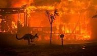 Avustralya Başbakanı'ndan Yangın Krizinde 'Hata Yaptık' İtirafı