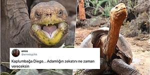Tek Başına Çiftleşme Rekoru Kırarak Soyunun Tükenmesine Engel Olan 100 Yaşındaki Kaplumbağa Diego