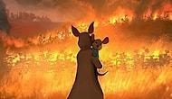 Dünyanın Her Yerinden 10 Sanatçı Güzel Sanatla Avustralya Orman Yangınlarına Saygı Duyuyor.