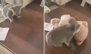 Avustralya'da Yangından Kurtarıldıktan Sonra Bakıma Alınan Koala İlk Defa Oyuncak ile Buluşuyor!