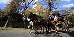 İBB, Adalar'daki Fayton ve Atları Satın Alıyor: 'Doğal Yaşam Alanlarına Bırakılacaklar'