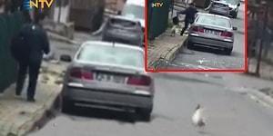 Kendisine Taş Atan Postacının Önünü Kesip Saldıran Horoz!
