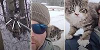 -20 Derece Havada Doğada Bulduğu Kediyi Sahiplenen Adamın Kaydettiği Muazzam Görüntüler!