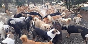 'Korkunç Görüntülere Rastlıyoruz': Çatalca ve Silivri Bölgesine Bırakılan Köpekler Açlıktan Birbirini Yiyor İddiası